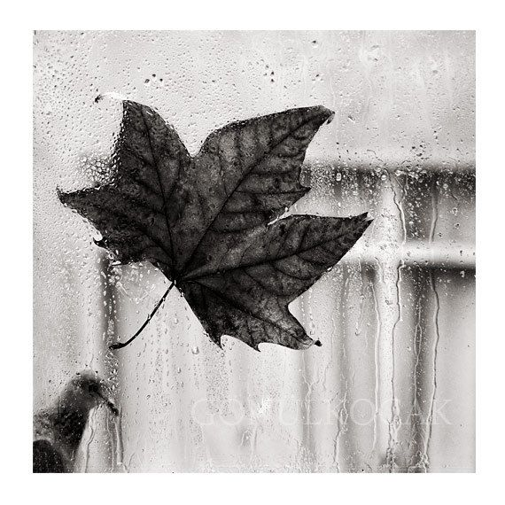 Wall decor black and white photography rain by gonulk on etsy