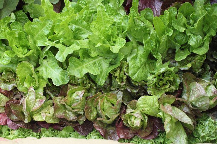 Odla grönsaker – Alla kan lyckas! | Blomsterlandet.se