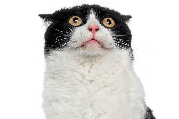 Pin By Jaguar On Cats Cat Meowing At Night Cat Diarrhea Cats