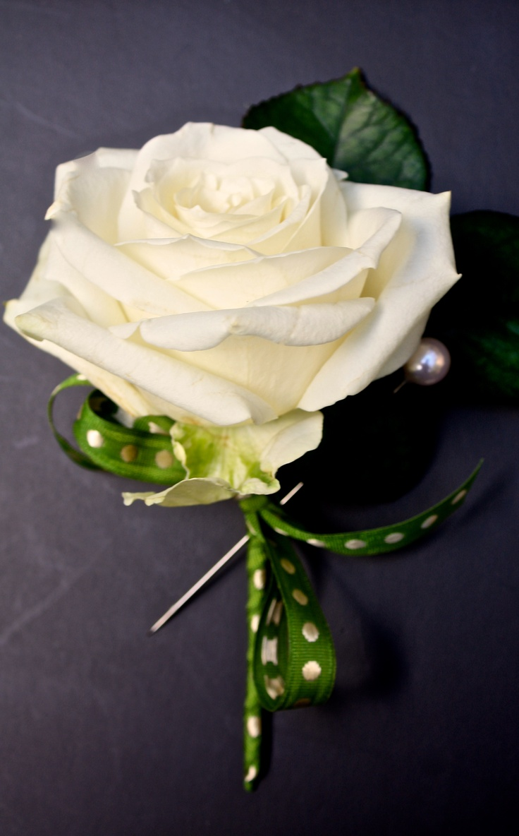 Cream rose buttonhole with a lovely polka dot ribbon.