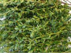 použití tymiánu - Nejlepší bylinka na bolesti žaludku, průjem, artritidu, bolest v krku, chřipku …