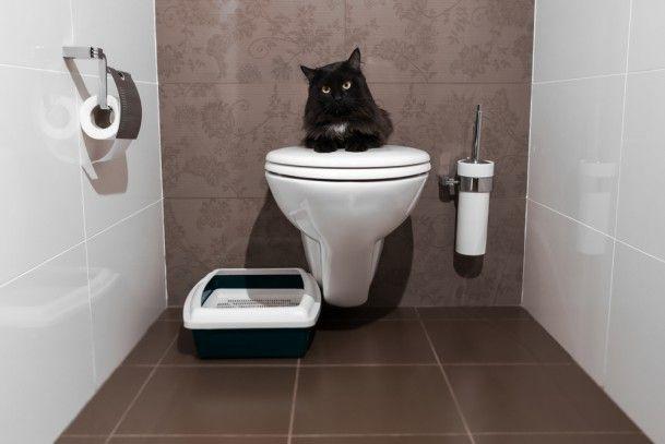 PRO PLAN® — Для владельцев домашних животных — Статьи — Ваша кошка, что нужно знать о здоровье