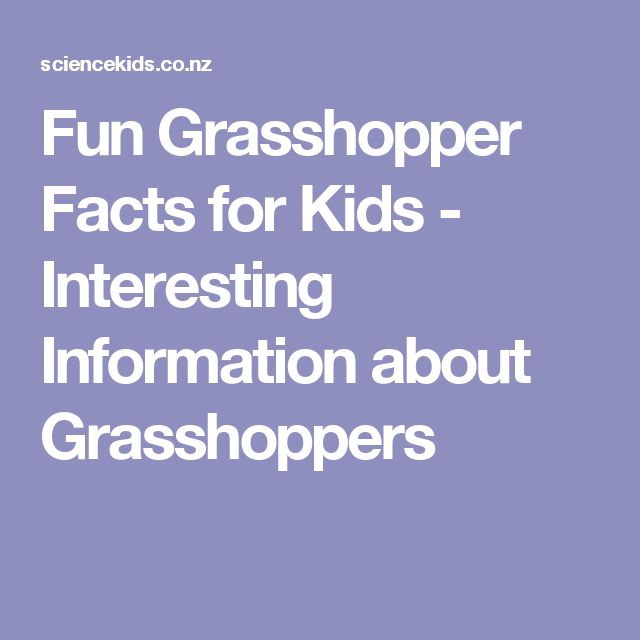 Fun Grasshopper Facts for Kids - Interesting Information about Grasshoppers