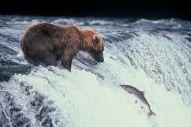 Pesce sostenibile: la filiera del salmone selvaggio - Parliamo di Cucina
