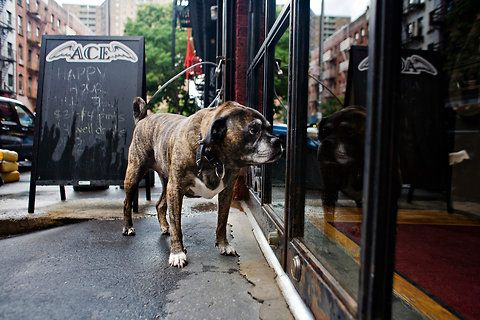 Miles looks into Ace Bar in the East Village. Dogs are no longer allowed inside :-(