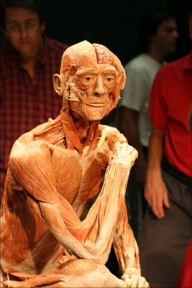 facts about body worlds and plastination Body worlds is the first exhibition of its kind to inform the visitor about anatomy, physiology and health by viewing real human bodies preserved through plastination, the preservation process invented by dr gunther von hagens in 1977 since the beginning of the exhibition series in japan in 1995, more than 40 million visitors in more than 100 .