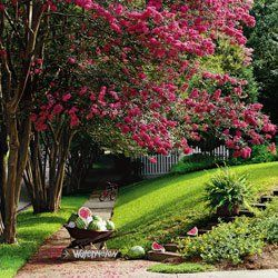 17 Best images about Garden u0026 Yard Camo on Pinterest | Crepe myrtle trees Yards and Plants