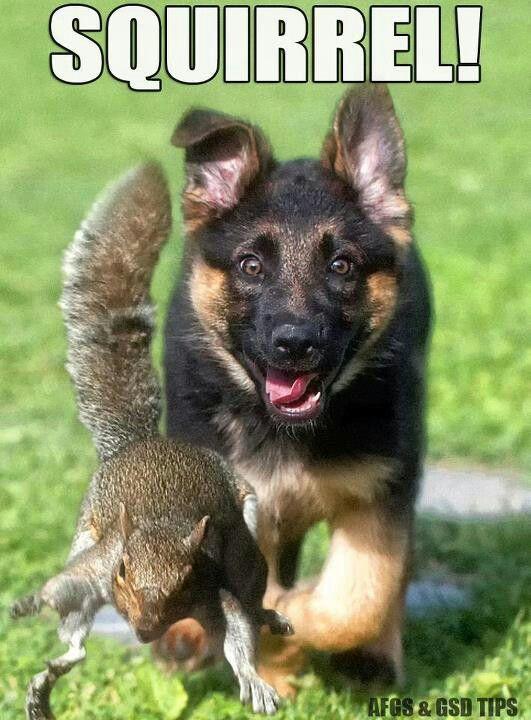 Must Love German Shepherds