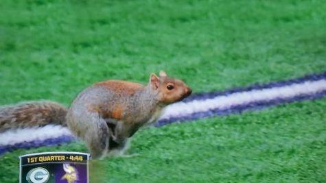 packers vs vikings   ... Runs Around Field During Packers vs Vikings Game   Daily Snark