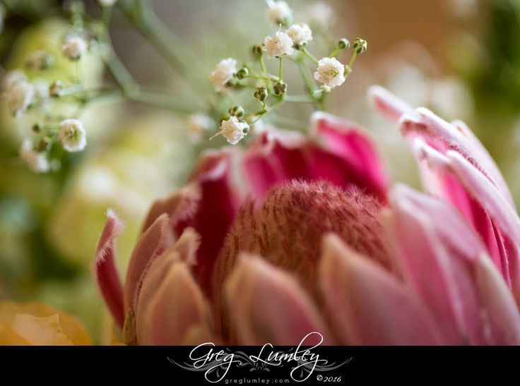 Proteas in wedding arrangements by Greg Lumley Cape Town Photographer