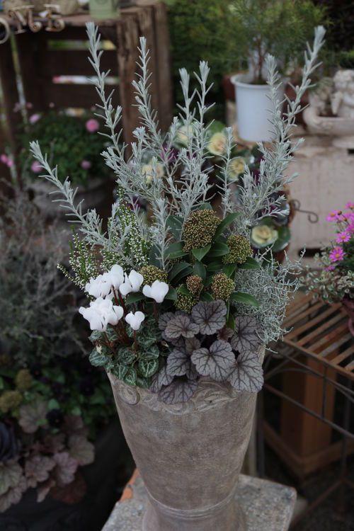 IMG_9833.JPG: : Bambyの庭 produced by ゆくはし植物園