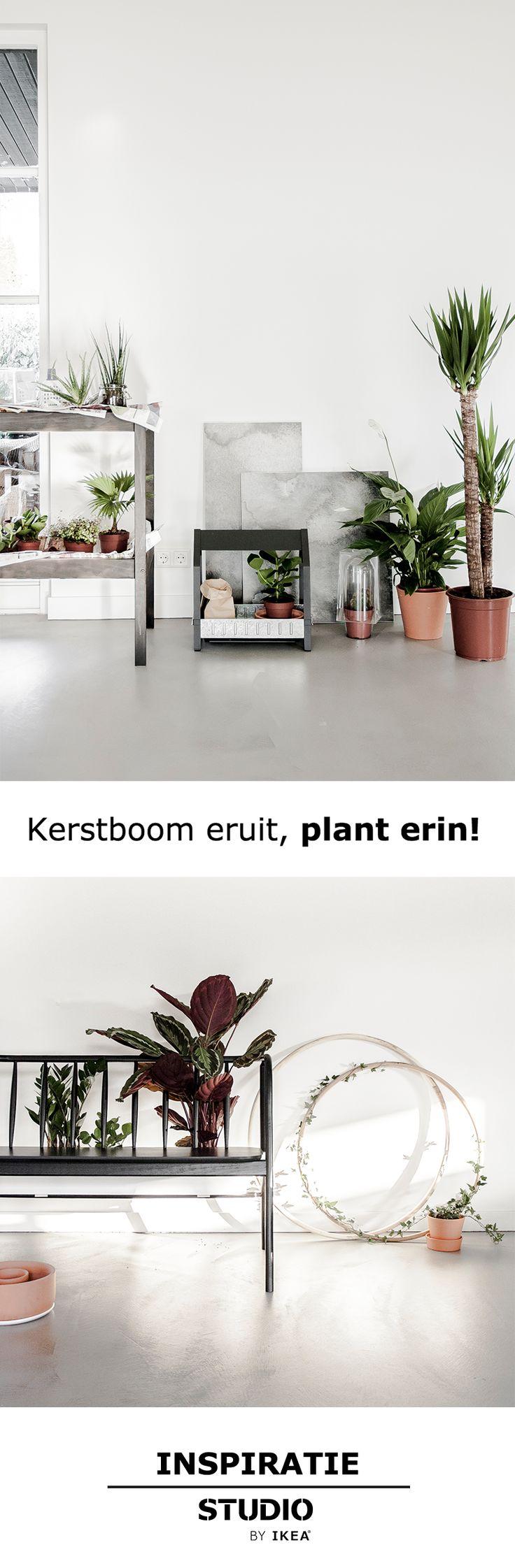 STUDIO by IKEA - Kerstboom eruit | StudiobyIKEA IKEA IKEAnl IKEANederland kerstboom opruimen plant groen fris plantenbak sfeer bloempot woonkamer inspiratie