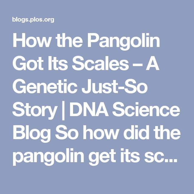 How the Pangolin Got Its Scales – A Genetic Just-So Story | DNA Science Blog  So how did the pangolin get its scales? Genetic research tells us how in a scientific paper co-authored by Professor Antoinette Kotze of the African Pangolin Working Group.