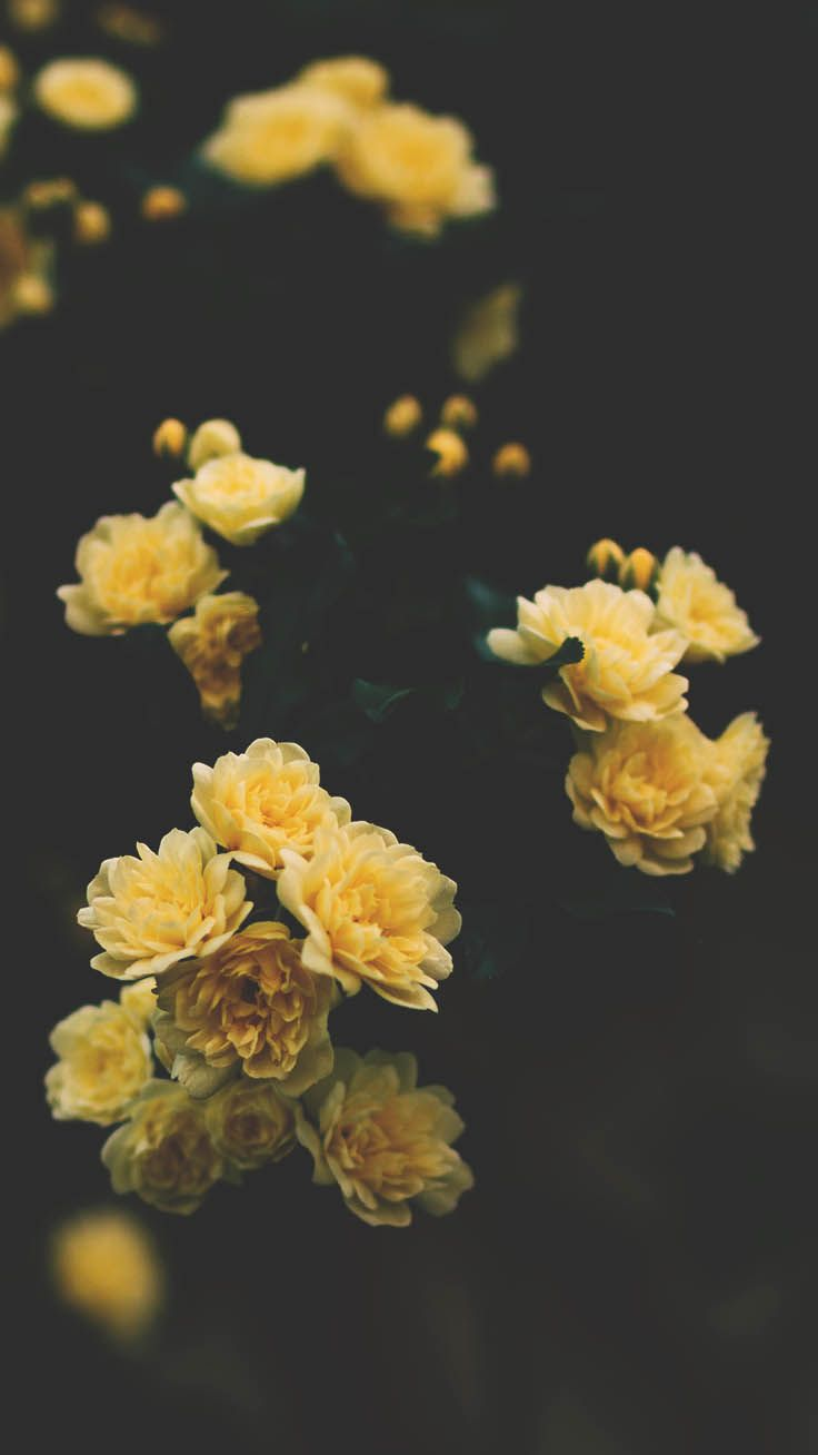 29 Romantic Roses Iphone X Wallpapers Preppy Wallpapers Floral Wallpaper Iphone Preppy Wallpaper Wallpaper Iphone Roses