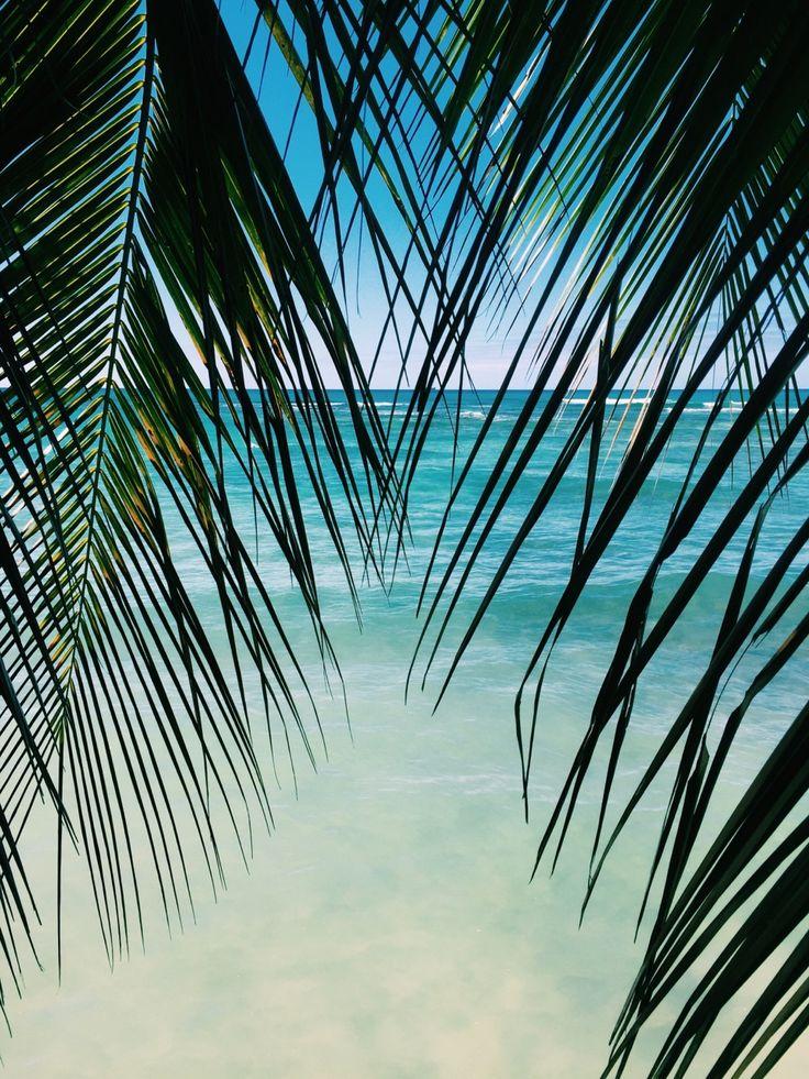 Palm tree on the beach. #beach