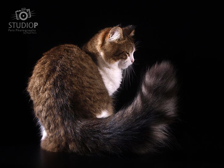 Me and my tail...