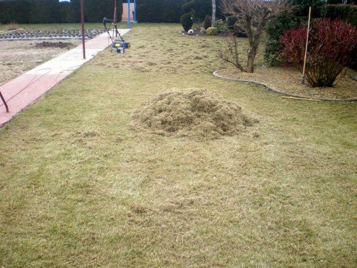 Les 25 meilleures id es de la cat gorie scarifier pelouse for Quand semer une pelouse