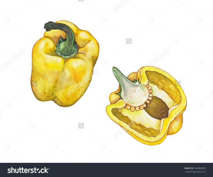 Yellow pepper - hand-drawn watercolor illustration of yellow bell pepper and cut pepper, separated, isolated on white