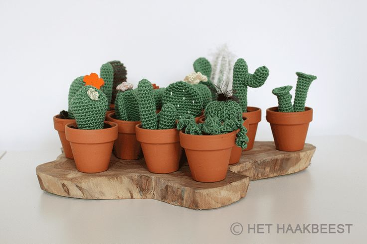 CACTUSSEN PATROON  Speciaal voor de minder groene vingers: een patroon van 15 leuke, kleine cactussen. Om je huis mee vol te zetten, of om kado te geven!