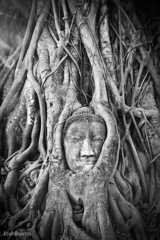 Buddha tree, Bodh Gaya, India