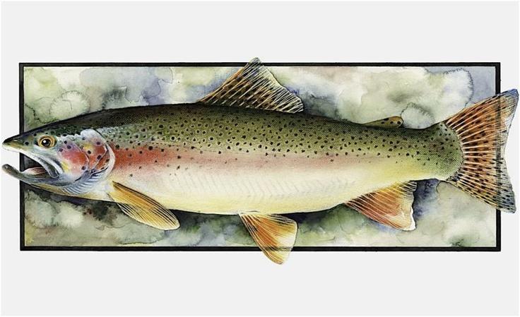 Tom Sasser fish painting
