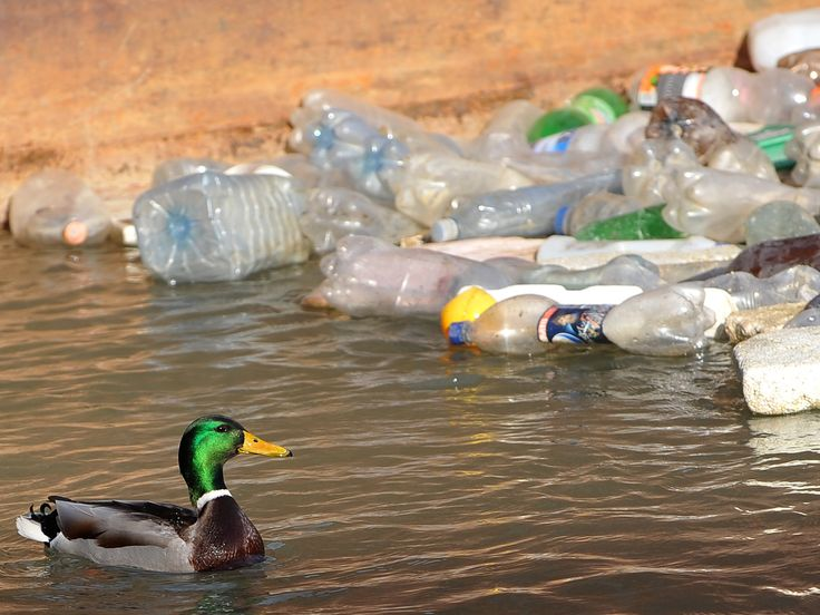 Government cut recycling targets after lobbying from plastics industry