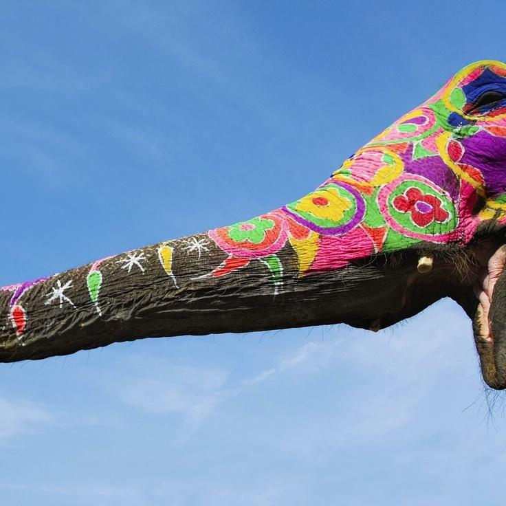 Je ziet hier een slurf van een olifant. Op deze slurf zijn tekeningetjes gemaakt met allerlei verschillende vrolijke kleuren. Er is gebruik gemaakt van primaire kleuren ( geel en rood ) , maar ook van secundaire en tertiaire kleuren.