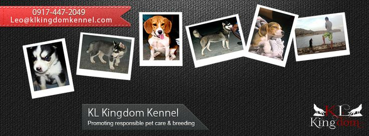 KL Kingdom - Promoting responsible pet care and breeding