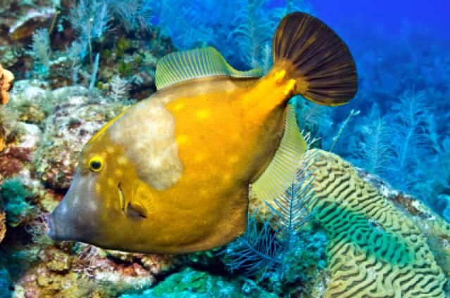22 best ocean life images on pinterest ocean life navy for Florida tropical fish
