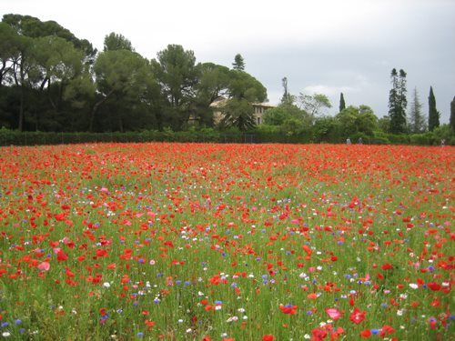 Montpelier: playing in to the red coloured by red!