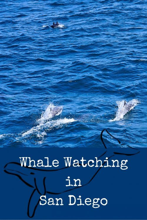 Whale Watching in San Diego: Best Seasons to go, what to bring and more tips to make your Whale Watching Tour a fun experience :)