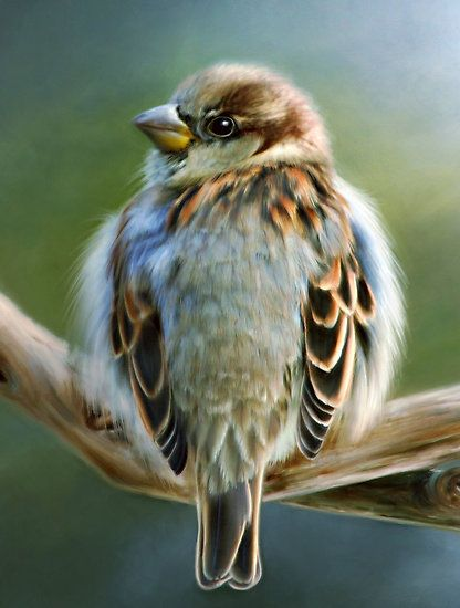 Pretty little sparrow