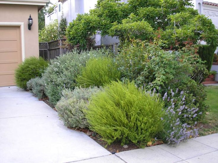Layered low maintenance planting border the garden and Low maintenance garden border ideas