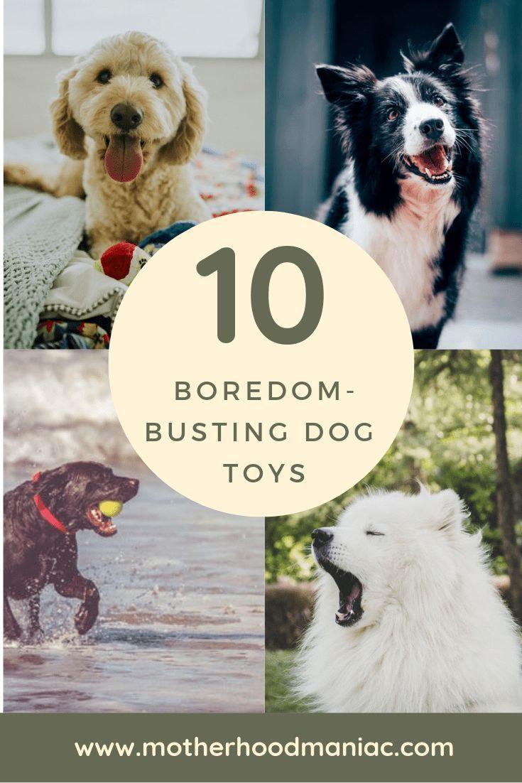 10 Boredom Busting Dog Toys Big Dog Toys Best Dog Toys Dog Toys