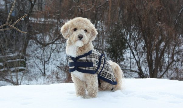 THE LONDON (BLS1591) This chic and functional dog coat features 100% multi-weave traditional plaid for a classic equestrian feel. Very attractive and sure to impress. Perfect for windy days.