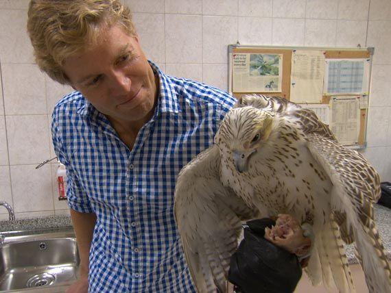 Abu Dhabi's falcon hospital...