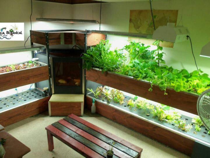 21 best images about custom aquaponics on pinterest grow for Fish tank hydroponic garden