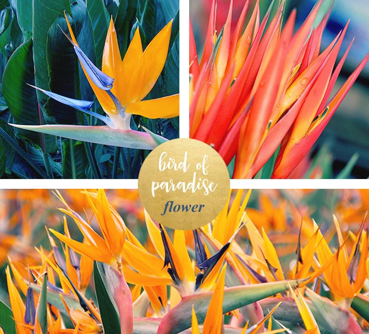 Bird of Paradise Meaning and Symbolism - Fresh by FTD