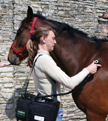 17 Best Images About Equine Laser On Pinterest The Horse