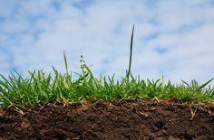 Как быстро определить кислотность почвы на участке? . Обсуждение на LiveInternet - Российский Сервис Онлайн-Дневников