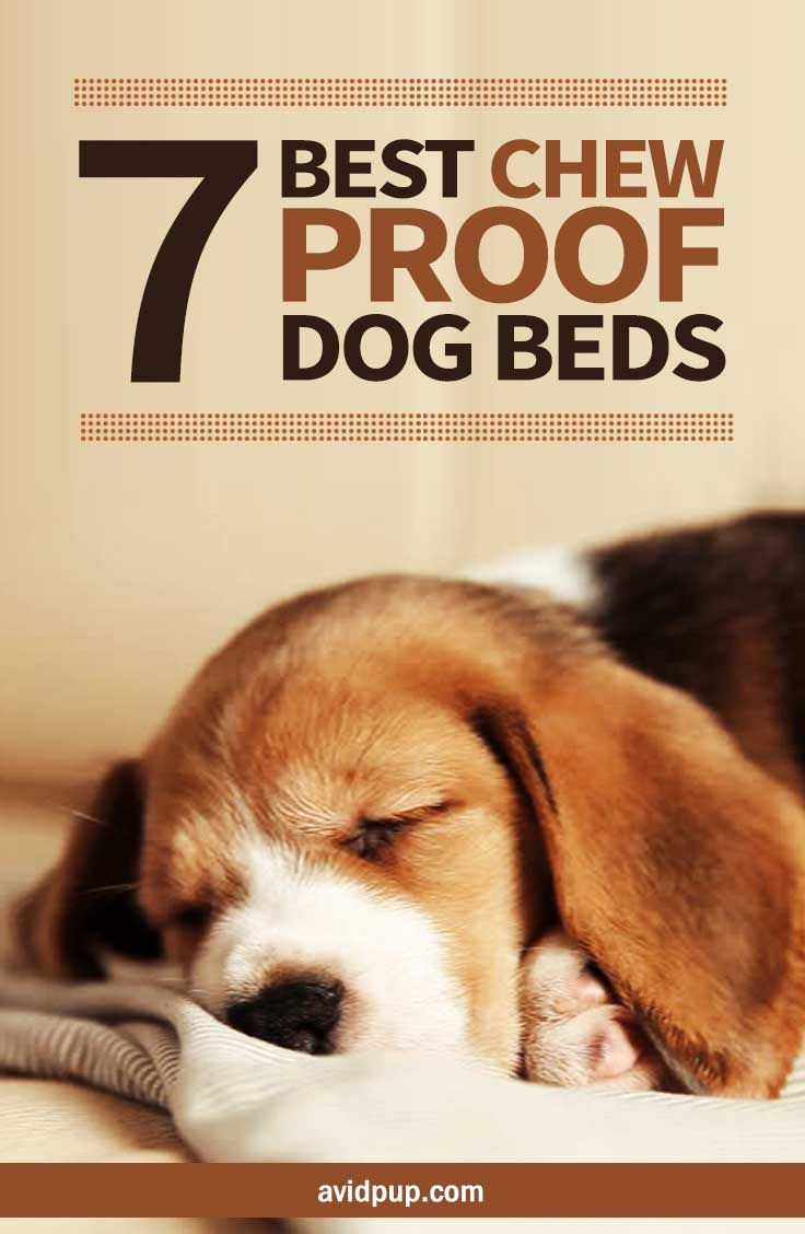 Top 7 Best Chew Proof Dog Beds Chew Proof Dog Bed Cool Dog Beds Dog Bed