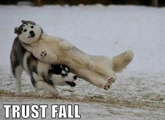 Funny Animals (13 Pics)