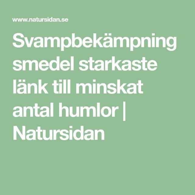 Svampbekämpningsmedel starkaste länk till minskat antal humlor | Natursidan