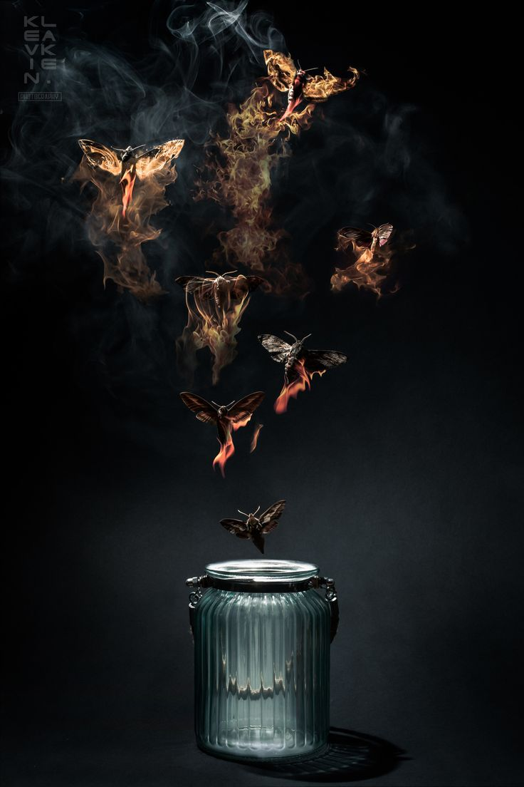Moths to a Flame - Aluminium print 60x40cm - FREE UK DELIVERY