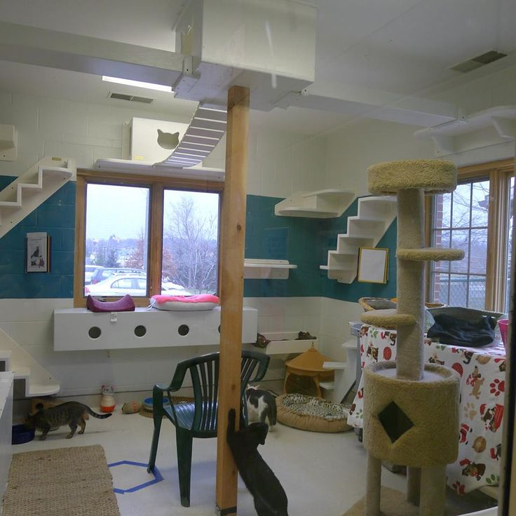 easy to clean surfaces for healthy kitties i espcially love the tunnelwindow box cat play roomscat - Cat Room Design Ideas