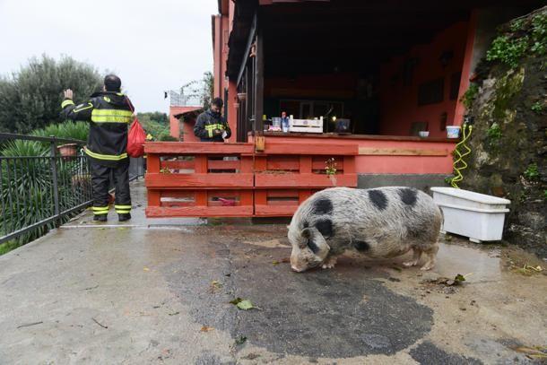 Pra', via Montecucco: vigili del fuoco al lavoro