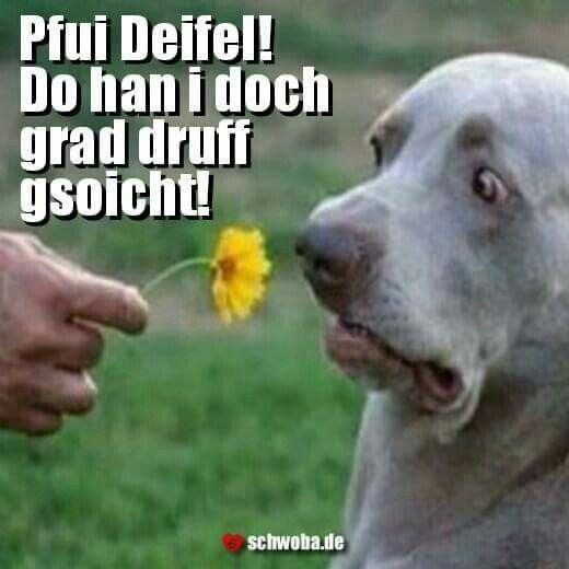 #hund #blume #pipi #pinkeln #ekel #schwäbisch #schwaben #schwoba #württemberg