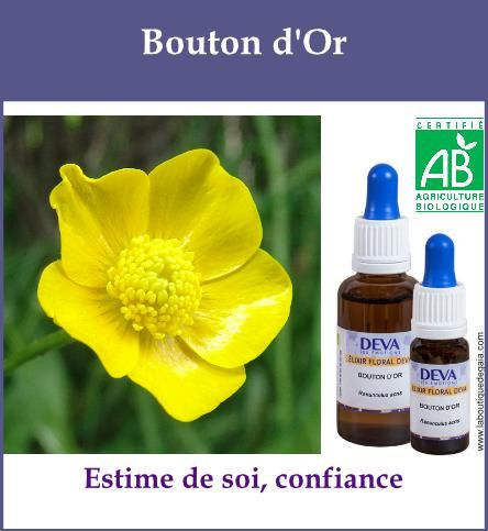 Bouton d or 1