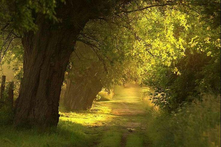 Camino dorado