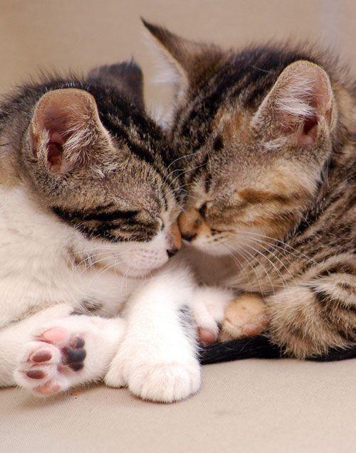 Картинка с целующимися котами, надписью друзья картинки
